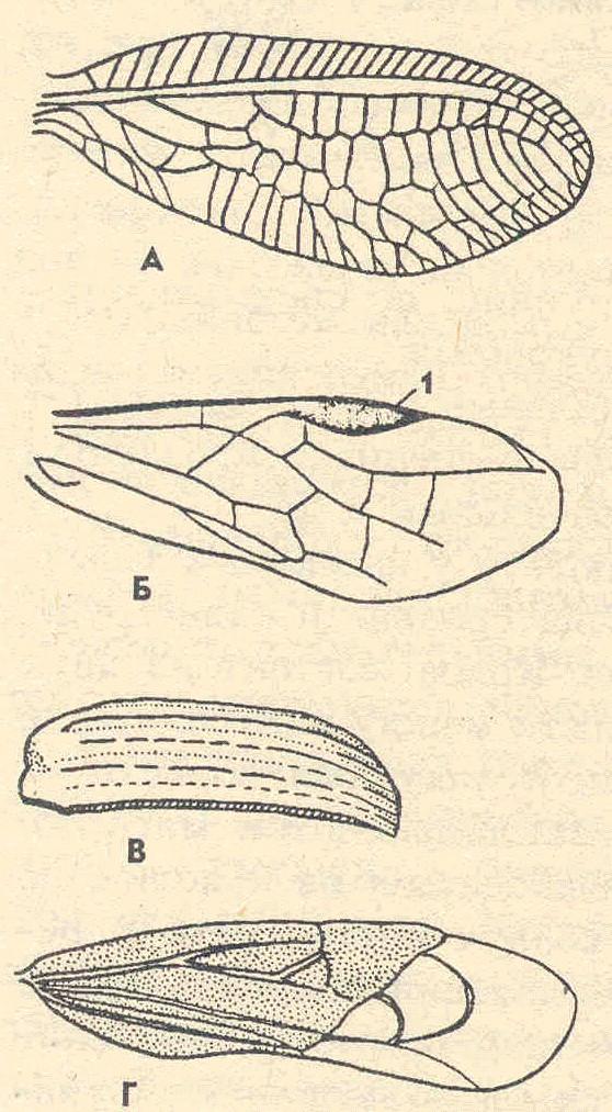 Схема строения крыла