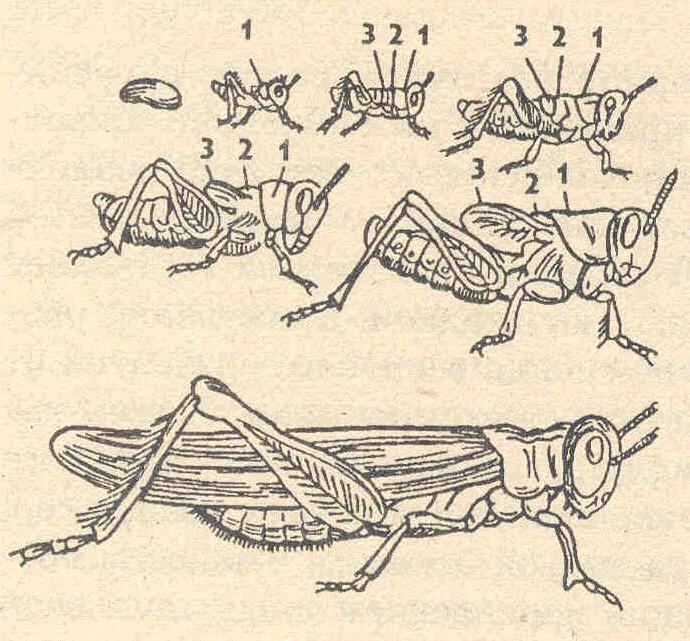 препараты от личиночных паразитов в носоглотке