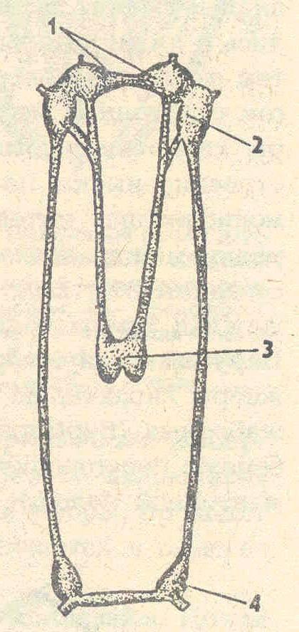 Схема нервной системы
