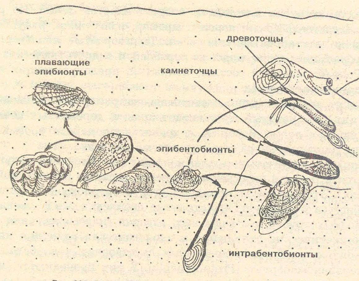 редкие паразиты человека
