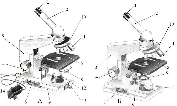 В микроскопе выделяют две
