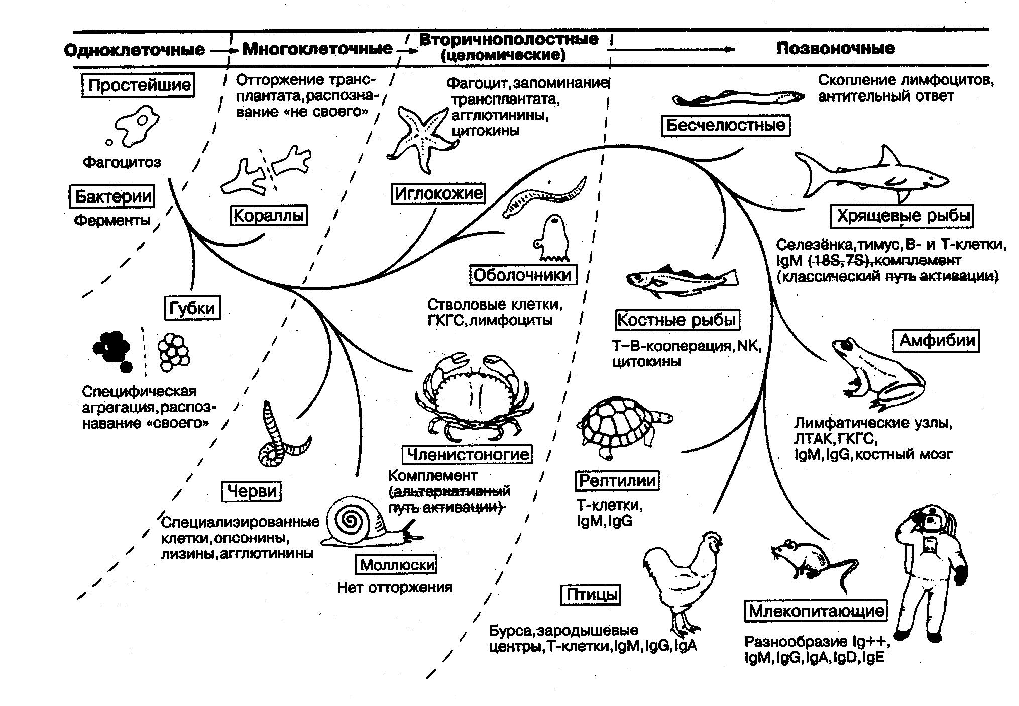 Рассмотрите схему, сделайте вывод о том, какая система.
